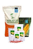 Солодка кукурудза цукрова Мармурова біколор Мнагор 1 000 насінин на 1,5 соток, ранньостиглі насіння цукрових, фото 1