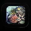 """3D окуляри зі слайдами """"Підводне життя"""" Lakeshore, фото 4"""