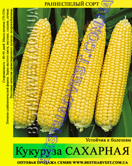 Семена кукурузы «Сахарная» 25 кг (мешок)