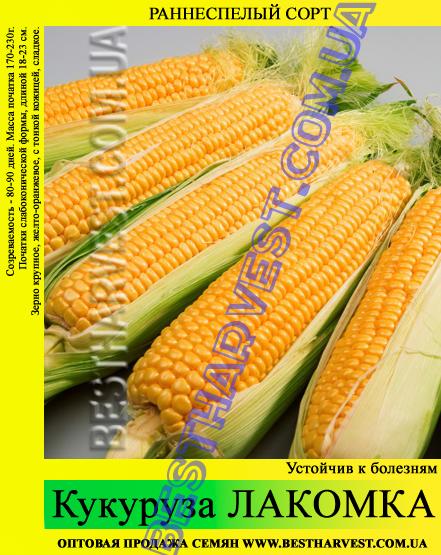Семена кукурузы «Лакомка» 25 кг (мешок)