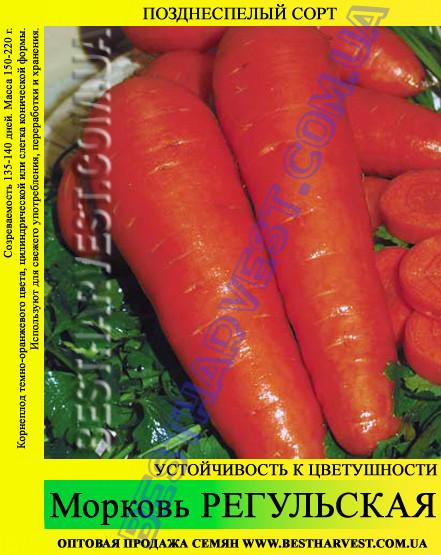 Семена моркови Регульская 1 кг