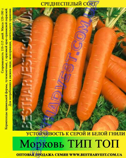 Насіння моркви Тип Топ 1 кг