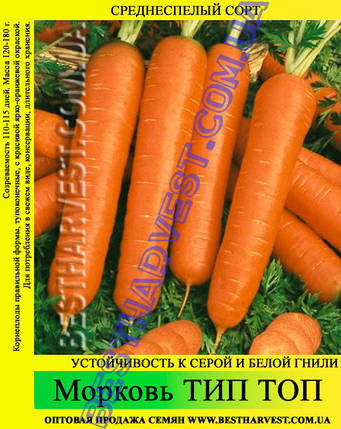 Насіння моркви Тип Топ 1 кг, фото 2