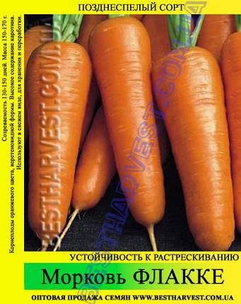 Семена моркови «Флакке» 25 кг (мешок), фото 2