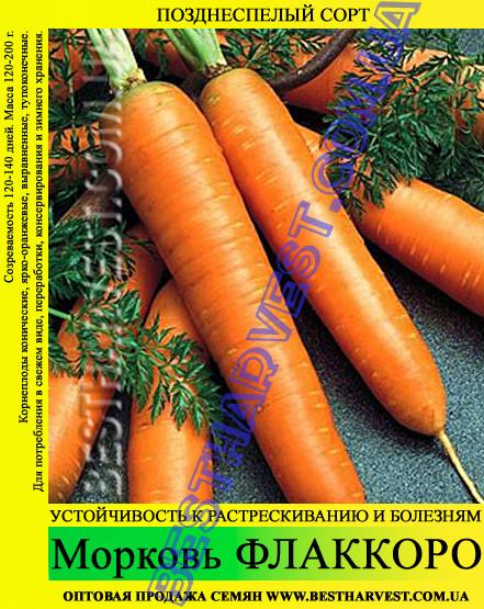 Семена моркови Флаккоро 1 кг