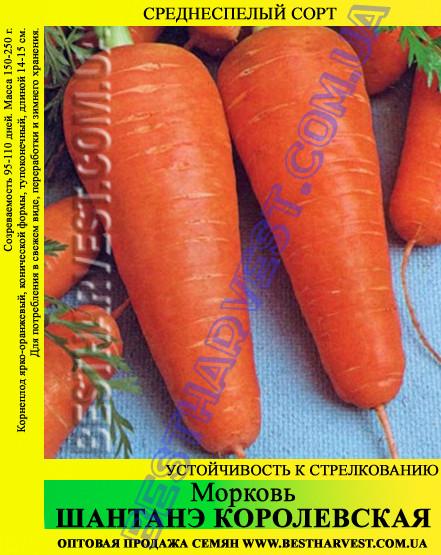 Семена моркови «Шантане Королевская» 25 кг (мешок)