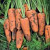 КАСКАДF1 семена моркови Шантане PR (1,6-1,8 мм)