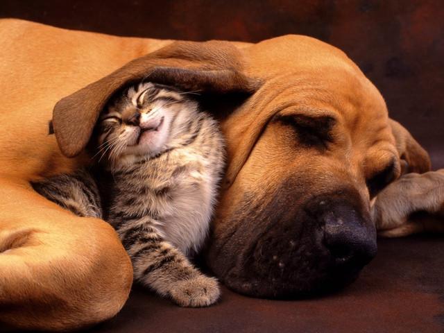 «Стоп-стресс» от нервозов у собак и котов( боязнь  громких  звуков).