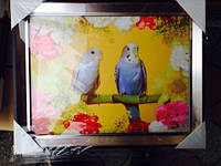 Картина в рамке 45*40см (Попугаи).  код 56014