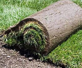 Рулонний газон Універсальний. Газон в рулонах