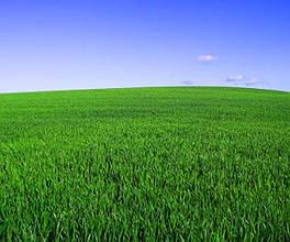 Посів газону. Посівний газон під ключ