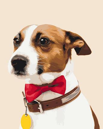 Собачка чемпіон, фото 2