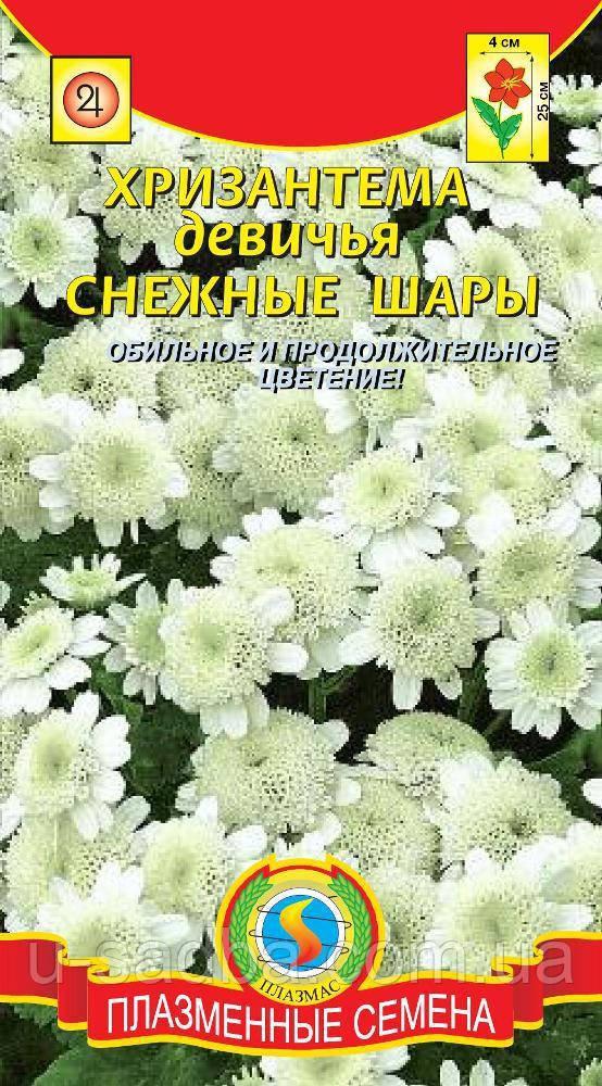 Насіння квітів Хризантема дівоча Снігові кулі 0,1 г білі (Плазмові насіння)