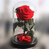 Вечная роза в колбе | Цветок роза под стеклом большая красная