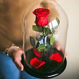 Роза в колбі. Квітка під склом велика 24см, фото 2