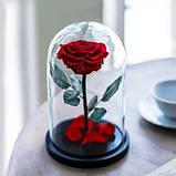 Вечная роза в колбе | Цветок роза под стеклом большая красная, фото 3