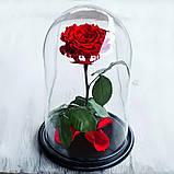 Вечная роза в колбе | Цветок роза под стеклом большая красная, фото 4