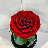 Роза в колбі. Квітка під склом велика 24см, фото 7