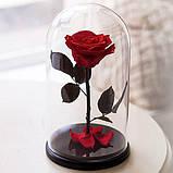 Роза в колбі. Квітка під склом велика 24см, фото 3