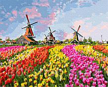 Мельницы в тюльпанов поле