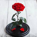 Роза в колбі. Квітка під склом велика 24см, фото 4