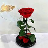 Вечная роза в колбе | Цветок роза под стеклом большая красная, фото 5