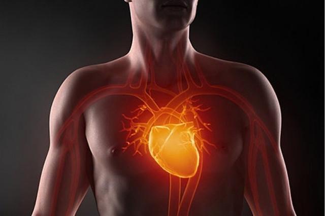 Программа  восстановления сердечной мышцы  За всю жизнь сердце перекачивает тонны крови. Сердечная мышца часто истощается до срока.