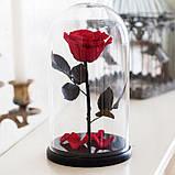 Вечная роза в колбе | Цветок роза под стеклом большая красная, фото 2