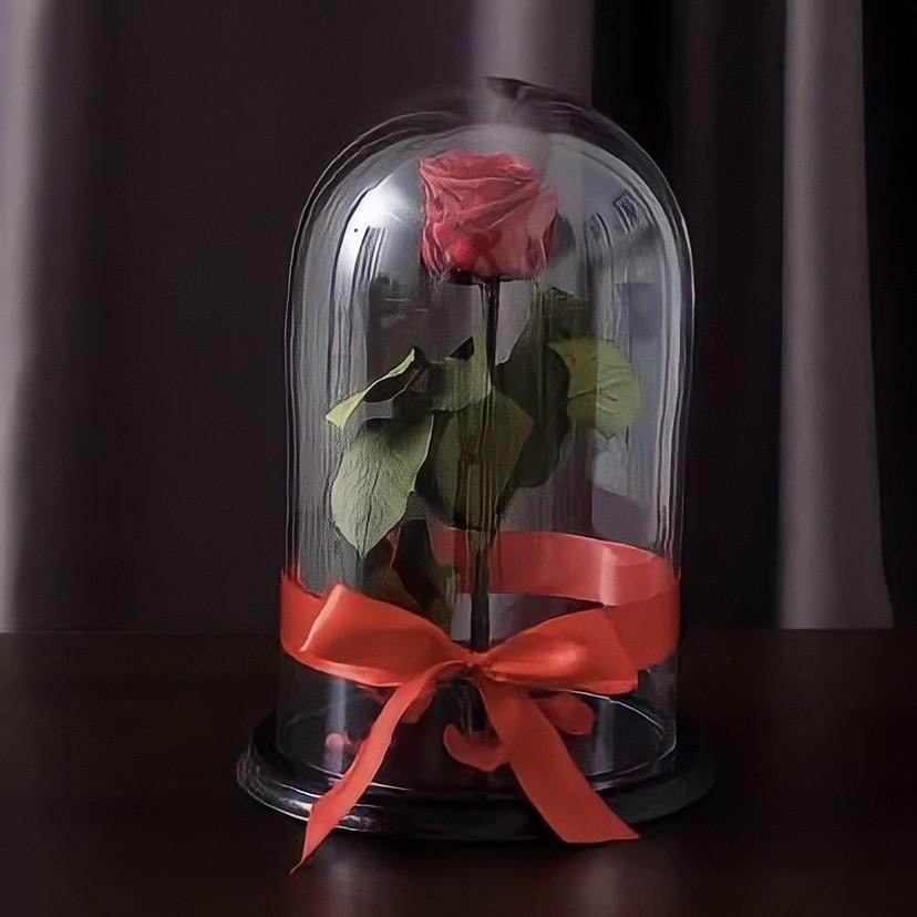 Роза в колбі. Квітка під склом велика 24см