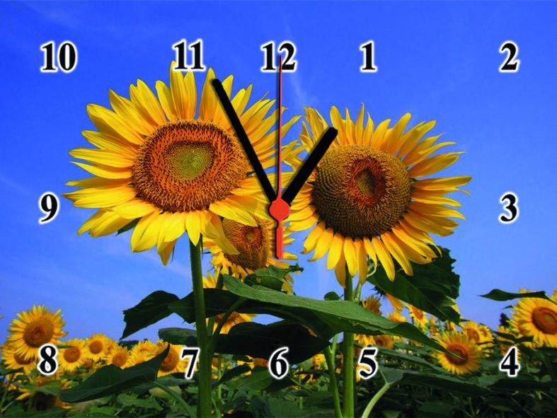 """Настінні годинники """"Соняшники в полі"""" кварцові"""