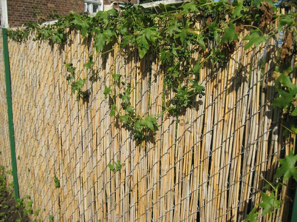 забор из камыша, фото_4