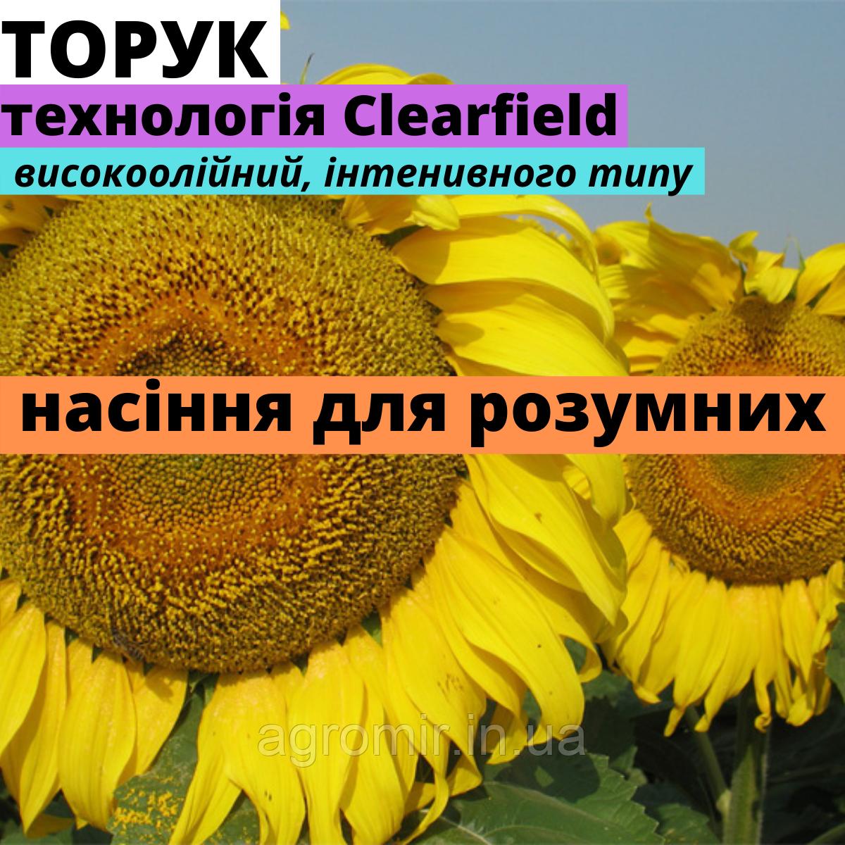 Семена подсолнечника Торук F1 в Україне от ООО АФ НПП АГРОМИР