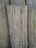 Камышовая рогожка, размер 1,6 х 6 м, фото 3