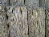 Камышовая рогожка, размер 1,6 х 6 м, фото 4
