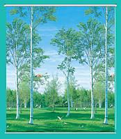 Рулонные шторы жалюзи 1 м берёзовая роща
