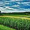 Президент підписав закон щодо зниження ставки ПДВ для деяких видів аграрної продукції