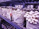 Блоки для вирощування Опеньок тополиний., фото 6
