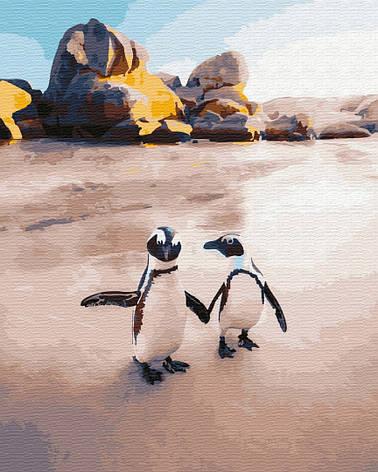 Пингвины на пляже, фото 2