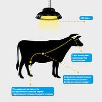 Автоматизована система освітлення в корівнику