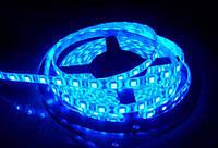Led 5630 Blue 181215