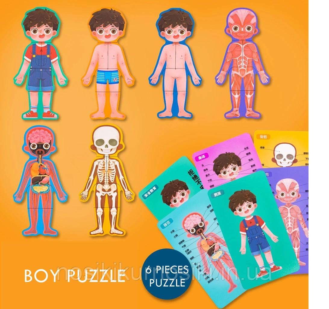 Развивающая игрушка Гардероб MD 2308 Анатомия, карточки - пазл тело человека - для мальчика