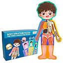 Развивающая игрушка Гардероб MD 2308 Анатомия, карточки - пазл тело человека - для мальчика, фото 3