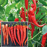 Семена перца Янка  F1, 100 семян, фото 2