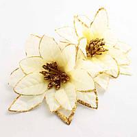 Головка рождественника (диаметр цветка 12 см)