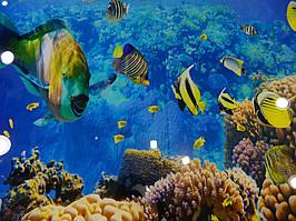 Стеклянное панно с фотопечатью на стену ванной - Морской мир 3