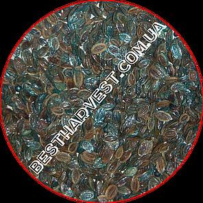 Семена укропа «Аллигатор» (кустовой) 250 г, инкрустированные (Vitas), фото 2