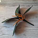 Кущ листя орхідеї великий, фото 2