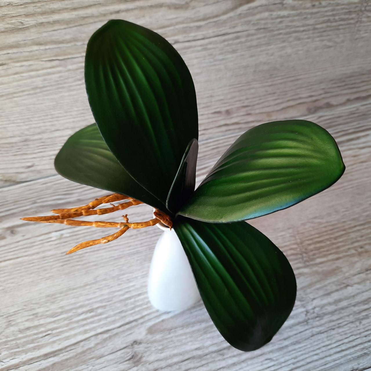 Кущ листя орхідеї великий