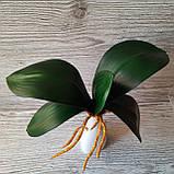 Кущ листя орхідеї великий, фото 5