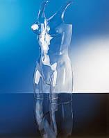 Торс женский прозрачный под нижнее белье (Италия)